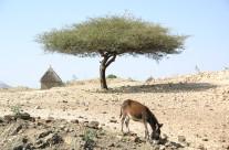 eritrea13